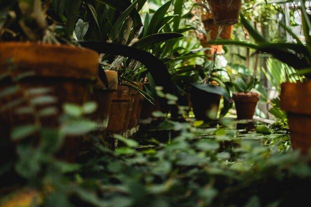 در کدام انواع می توان رشد سریع گیاهان آپارتمانی را دید؟