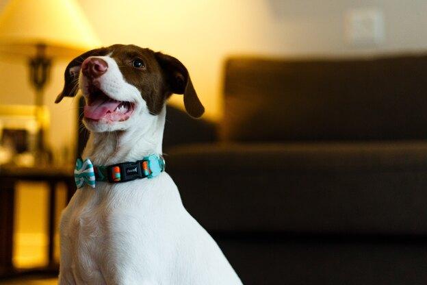 ۱۵ تا از برترین های نژاد سگ های خانگی