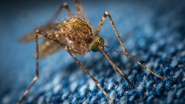راههای ارگانیک و شیمیایی کشتن پشه