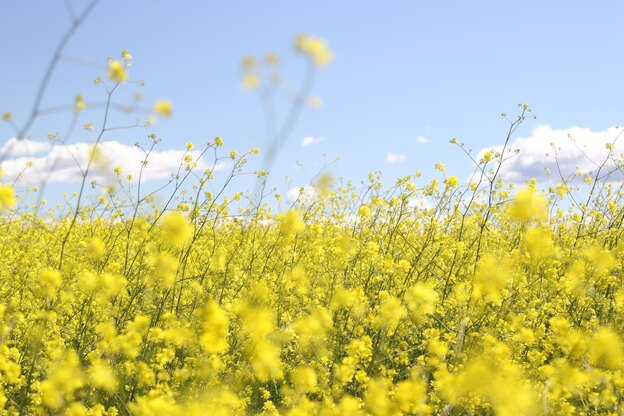 تغییر دکوراسیون فصل بهار
