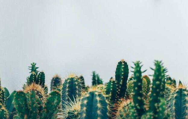 ۴ قانون ساده برای نگهداری از گیاهان خانگی