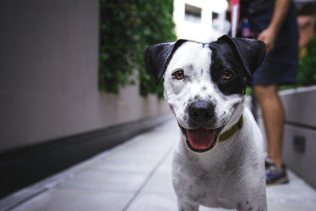 تربیت سگ: آموزش غلت زدن
