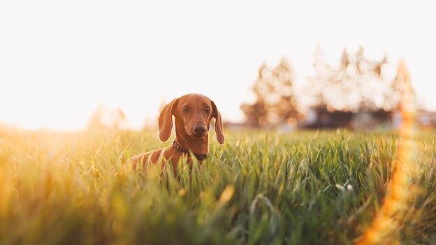 چگونه از یک سگ نابینا نگهداری کنیم؟
