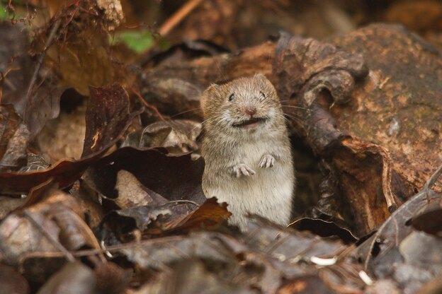 موش در خانه چقدر خرابکاری می کند؟