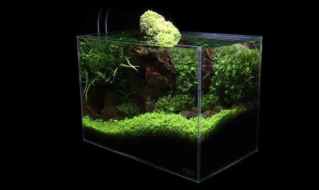 آب آکواریوم برای رشد سریع گیاه