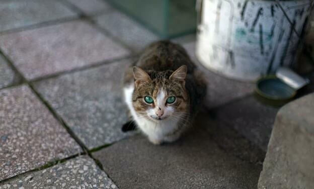 چرا گربه استفراغ می کند و مایع قهوه ای بالا می آورد؟
