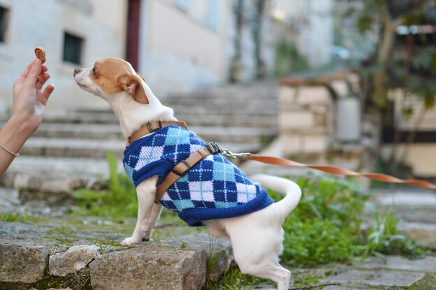 چطور جلوی پارس کردن سگ را بگیریم؟