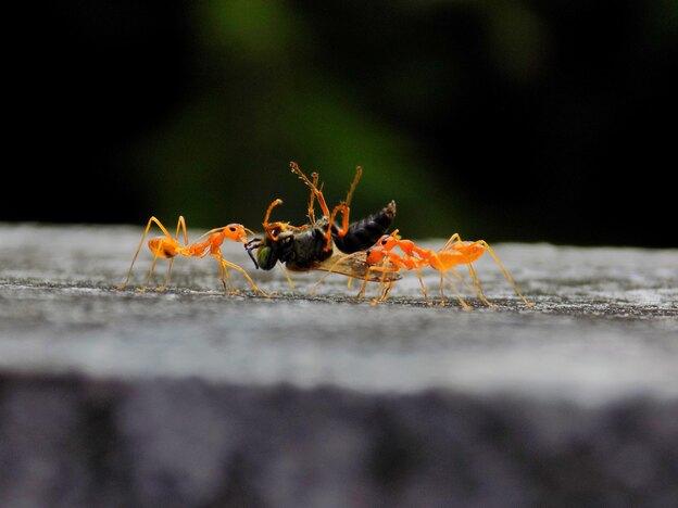 رهایی از مورچه های آشپزخانه