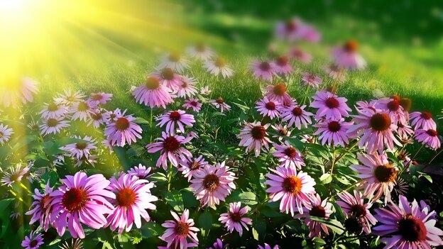 گل های پاییزی: بهترین گیاهانی که در پاییز گل می دهند