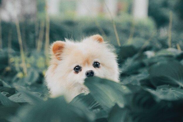 چرا سگ ها چاله می کنند؟