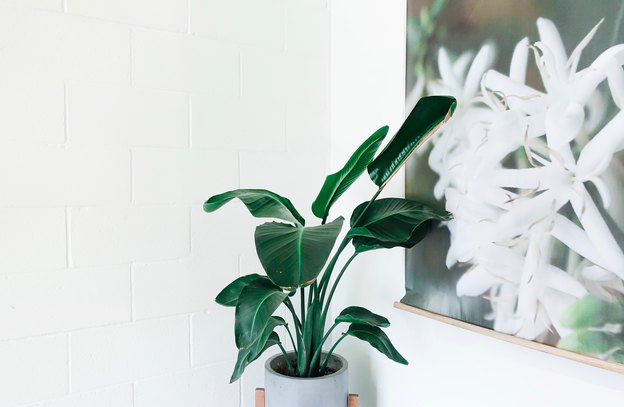 سمپاشی شته های گلدان ها و گیاهان داخل خانه