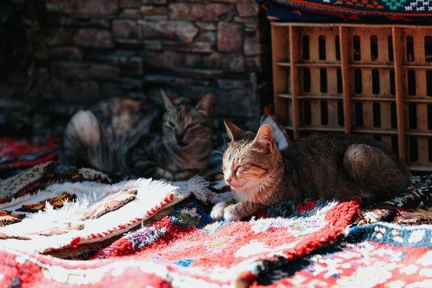 راهنمای کامل قالیشویی و کفسابی