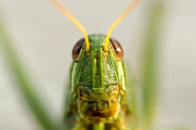چگونه از شر پشه ها و حشرات دیگر خلاص شوید