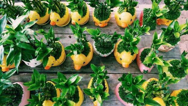 نگهداری از گیاهان آپارتمانی عجیب و غریب