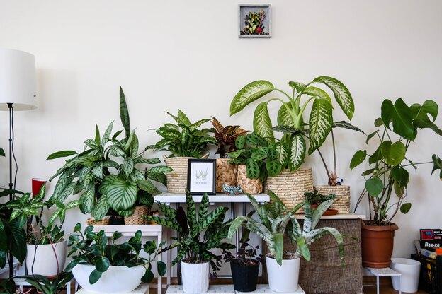رشد سریع گیاهان آپارتمانی؛ کدام گل ها؟
