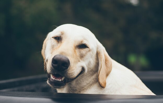 برای مسافرت با سگ چه کارهایی لازم است؟