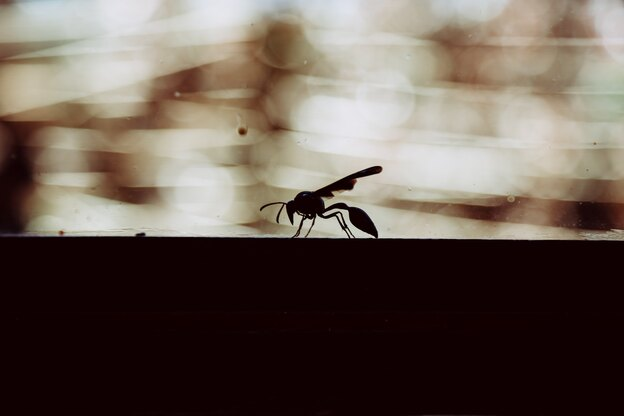 با مورچه های بالدار چه کنیم؟