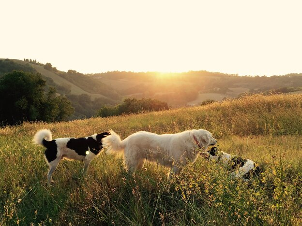 چه غذایی برای سگ خوب است و کدام غذاها مضرند؟