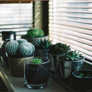 گیاهان خوب و بد برای فنگشویی