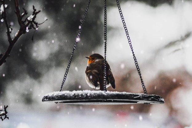 باربری و اسباب کشی در زمستان
