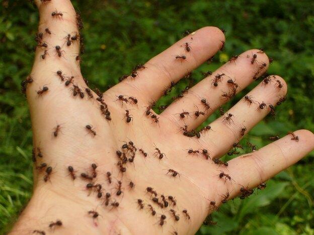 چطور ارگانیک سم مورچه بسازیم؟