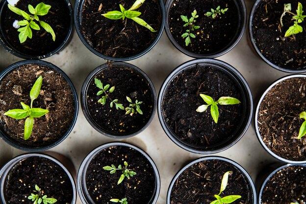 روش درست کردن بهترین کود برای رشد گیاهان آپارتمانی
