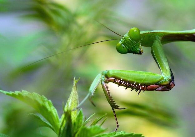 ۷ راه مبارزه با حشرات ریز خانگی