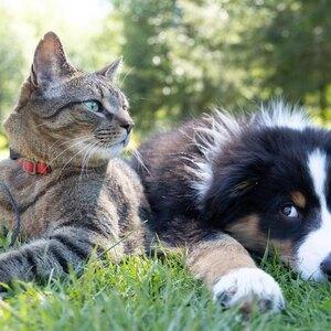 نکاتی برای آموزش به سگ و تعلیم ترفندهای مختلف