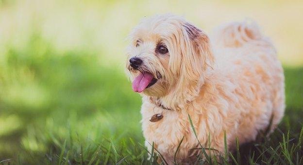 سگ خوشگل
