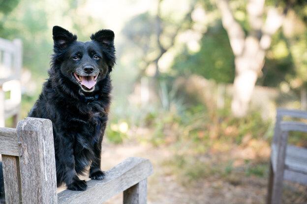 روش تربیت سگ خانگی