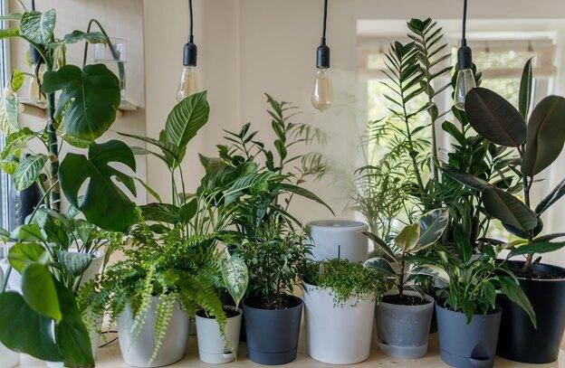 نکاتی درباره نگهداری از گیاهان آپارتمانی در فصل بهار