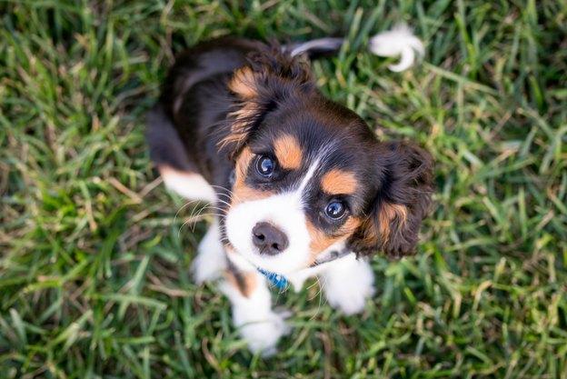 آنچه باید پیش از آوردن توله سگ دانست