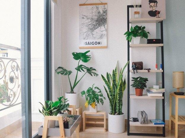 گیاهان آپارتمانی که در آب نگهداری می شوند