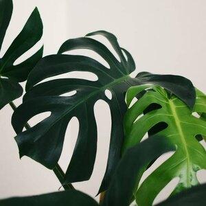 نحوه تقویت و کود دهی گیاهان خانگی