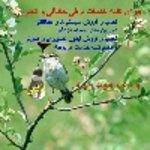 حامد نافعی
