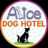 هتل آلیس