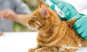 واکسن حیوانات