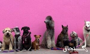 پانسیون سگ