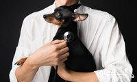 معاینه و درمان حیوانات