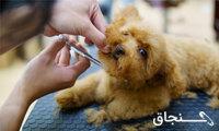 آرایش حیوانات خانگی