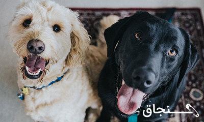 نگهداری حیوانات خانگی